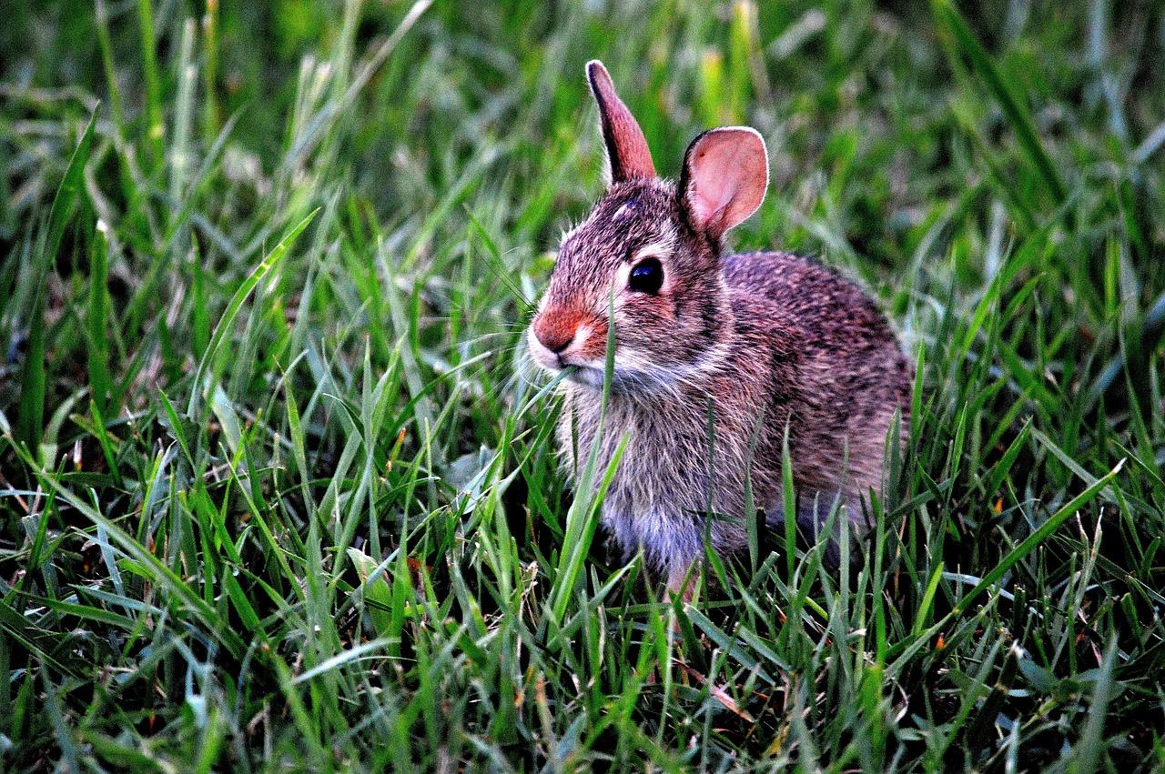 Inculquer la propreté à son lapin est possible. Il s'agit d'un animal qui est de nature propre.