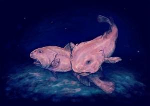 blobfish insolite