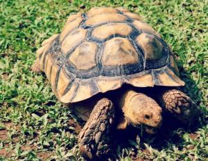 Découvrez tout ce qu'il faut savoir sur l'adoption de la tortue, afin de prendre soin d'elle.