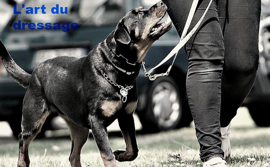 Purificateur D'Air Odeur Chien - 15 techniques à savoir - Les bases de l'éducation canine - 15 minutes par jour