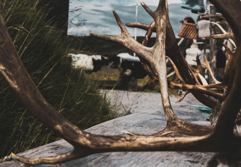 bois de cerf-une alternative saine pour votre chien