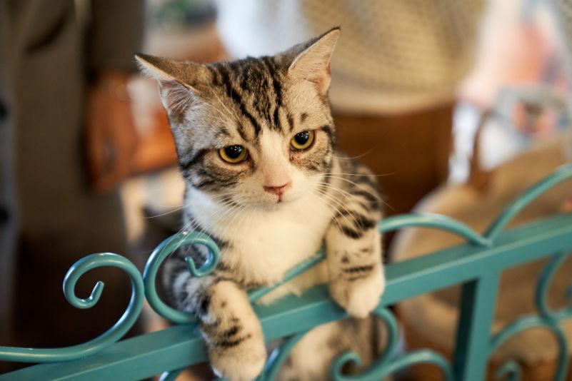 chat sur une grille en metal